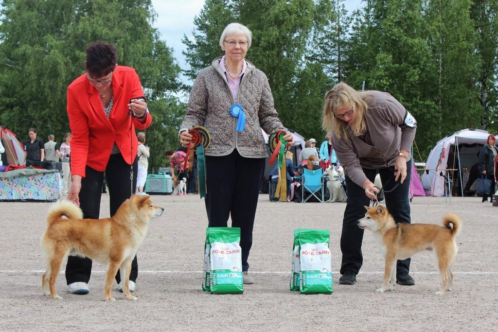 ROP VET Blackroyal's Aran & VSP VET Laggan Yuko (kuva: Katja Pesonen)